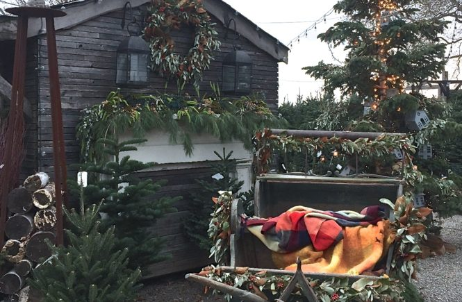 terrain garden holiday sleigh